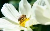 miniature 28-fleur