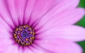 miniature 30-fleur