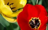 miniature 34- fleur