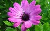 miniature 35- fleur