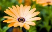 miniature 37- fleur