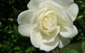 miniature 38- fleur