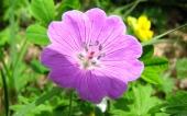 miniature 40- fleur