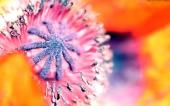 miniature 45- fleur
