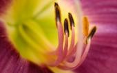miniature 46- fleur