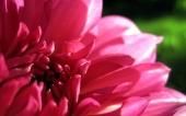 miniature 49- fleur