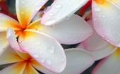 miniature 50- fleur