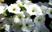 miniature 53- fleur