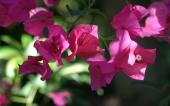 54- fleur