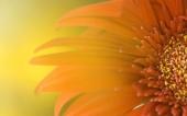 fond écran 55- fleur