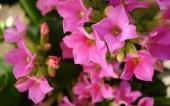 miniature 56- fleur