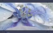 miniature 62-fleur