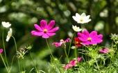 miniature 63-fleur