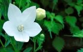 miniature 67-fleur