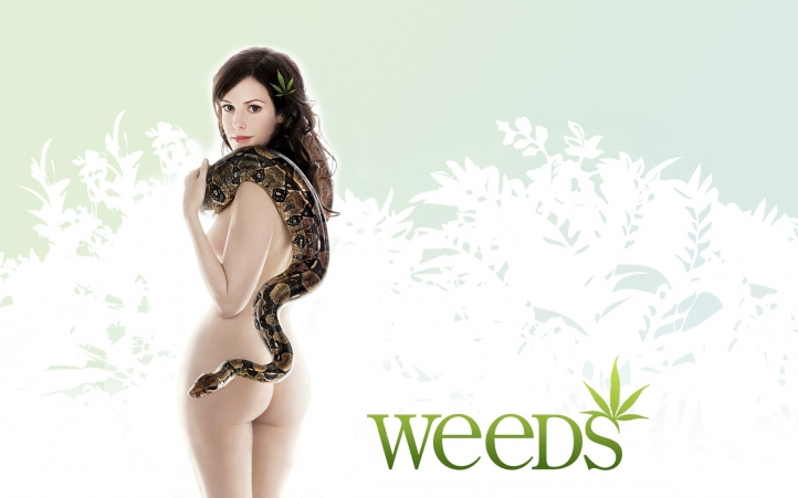 http://www.weesk.com/wallpaper/series-tv/weeds/weeds-nancy/weeds-nancy-720px.jpg